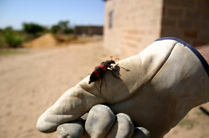 bug glove