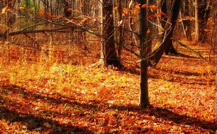 Autumn NY 2014
